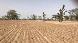 Terrains agricoles 10 ha -  Ndioukène