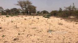 Terrains agricoles 1,54 ha - Mewane