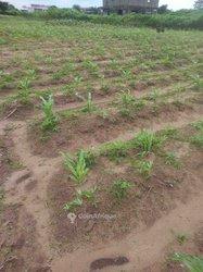 Terrains agricoles 600 m2 - Abidjan