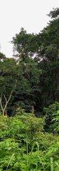 Terrains agricoles 30000 m2 - Ngoumou