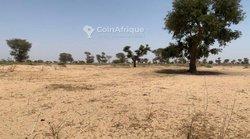 Terrain agricole 2,88 ha - Keur farang
