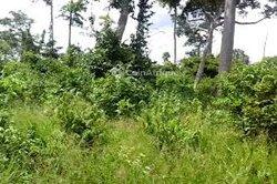 Terrains agricoles 1000000 m2  - Dimbokro