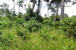 Vente Terrain agricole 150 ha - Dimbokro