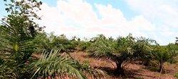 Terrain 1 hectare - Tori azohouè Cada