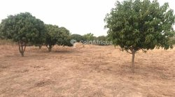 Terrain agricole 30 hectares - Ndiar