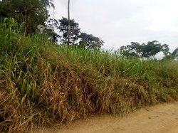 Vente Terrain agricole