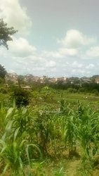 Vente Terrain agricole - Salmoa Moungo
