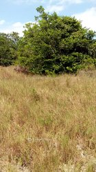 Terrains agricoles 500  m2 - Abidjan