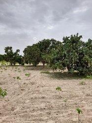 Vente Terrain agricole - Thiès