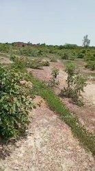 Terrain 5 hectares  - Brafaso