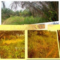 Terrain agricole 300 ha  - Agboville