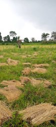 Vente Terrain agricole 15 Ha - Zone Rubino