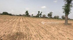 Terrain agricole  2,54 hectares - Tassette