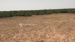 Terrain agricole  17 hectares - Tassette