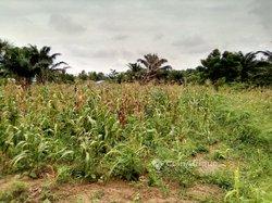Terrains agricoles - Ouédo