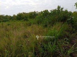 Vente Terrain agricole 450 ha - Zio 3