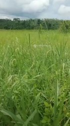 Vente Parcelle agri̇cole 10 hectares - Agboville