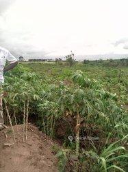 Terrains agricoles 200 ha - Azaguié