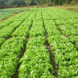 Offre d'emploi - Ouvrier agricole