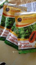 Semences papayer Calina IBP9