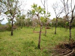 Parcelles agricoles - Djidja