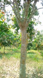 Vente Champs 10 hectares - Agboville