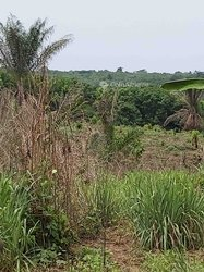Terrains agricoles 1 ha - Alepe