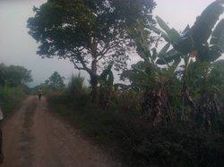 Terrains agricoles  - Salmoa