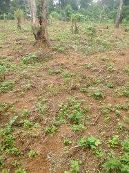 Terrains agricoles 500 m2 - Fougerol