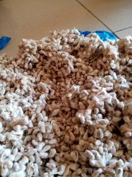 Gaine de coton