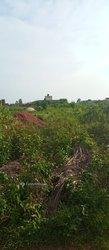 Terrain agricole 7,5 ha  - Sékou