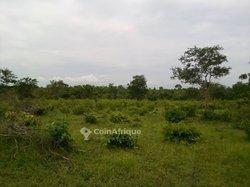 Terrains agricoles 200 m2 - Covè