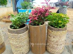 Espaces vert / plantes - fleurs