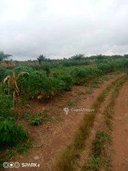 Vente Terrain agricole 8 ha - Djidja