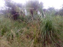 Vente Terrain agricole 50 ha - Dimbokro
