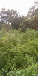 Terrain agricole 200 ha  - Djidja