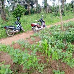 Terrains agricoles 50 ha - Abomey Détohou Village Kodji