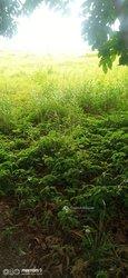 Terrain agricole 30ha - Assanou