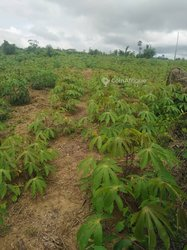 Vente Terrain agricole 10 ha - Bingerville