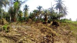 Terrains agricoles 500 m2 - Cocody