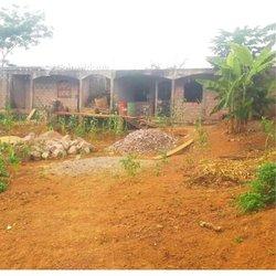 Vente Terrain - Ngousso