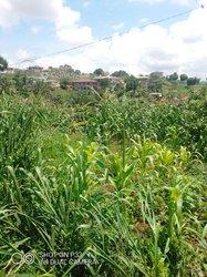 Terrain agricole 9 ha - Mbankomo