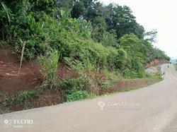 Vente terrain 2500 m² - Etoudi