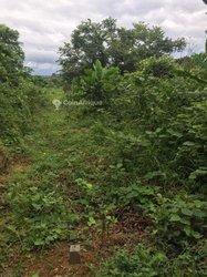 Terrains 1200 m2 - Yaoundé