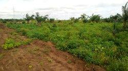 Vente terrain 2ha - Ouidah-Tori