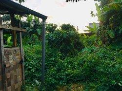 Vente Terrain agricole 400 m² - Douala