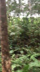 Vente Terrain agricole 300 ha - Agboville