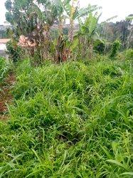 Vente Terrain 1000 m² - Yaoundé