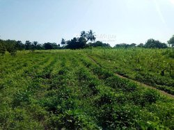 Terrain agricole - Asahoun